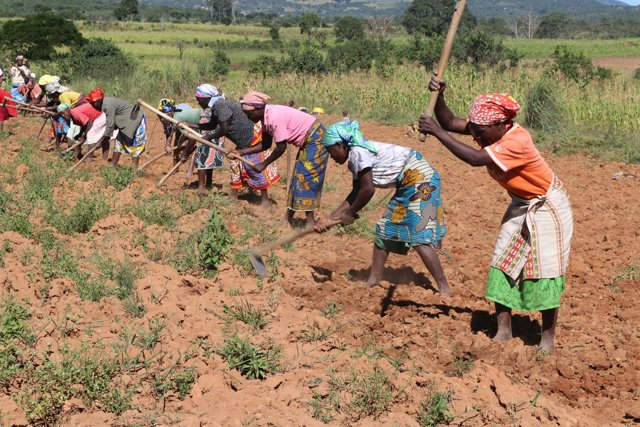 Women working the land